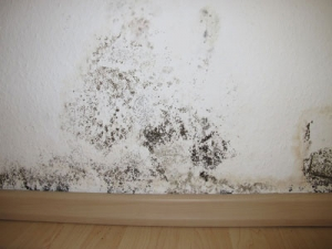 Home Inspection Mold